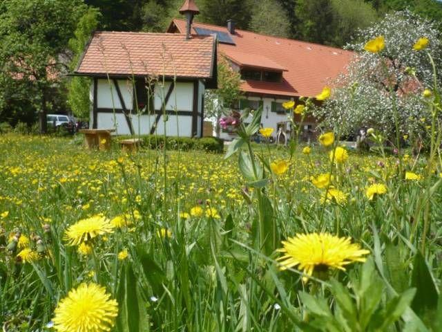 Biohof Schad in Isny  - ein qualitätsgeprüfter UrlaubsBauernhof zum Wohlfühlen