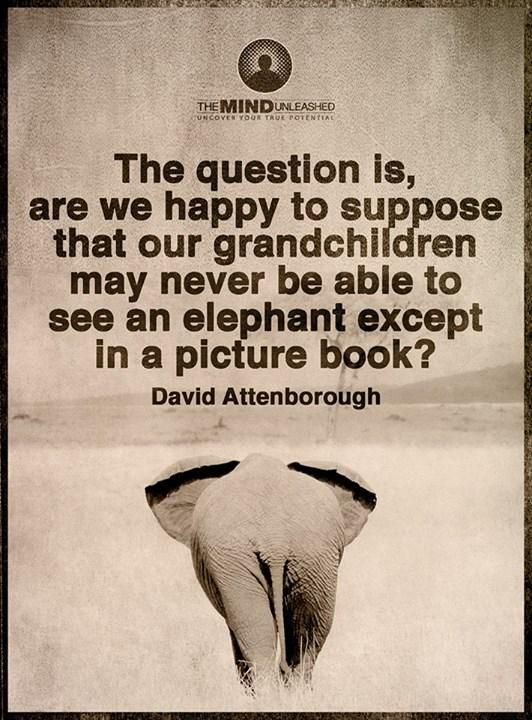"""The question is, are we happy to suppose that our grandchildren may never be able to see an elephant except in a picture book?"" - David Attenborough"