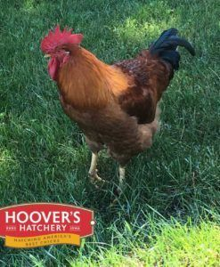 Hoover's Hatchery Red Ranger