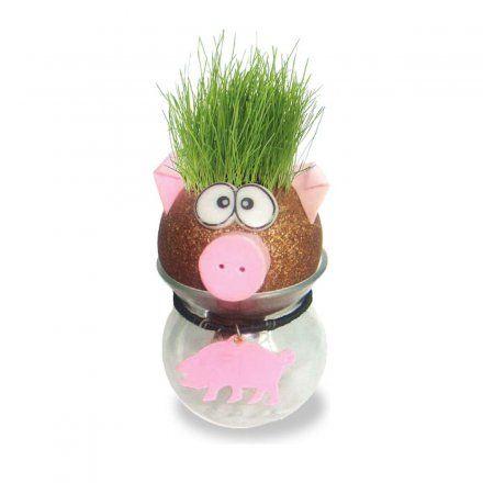 Graskopf Schwein von Feel Green jetzt im design3000.de Shop kaufen! Ein Wasserbehälter, ein lustig gestalteter Kopf, ein bisschen Kokosfasersubstrat...