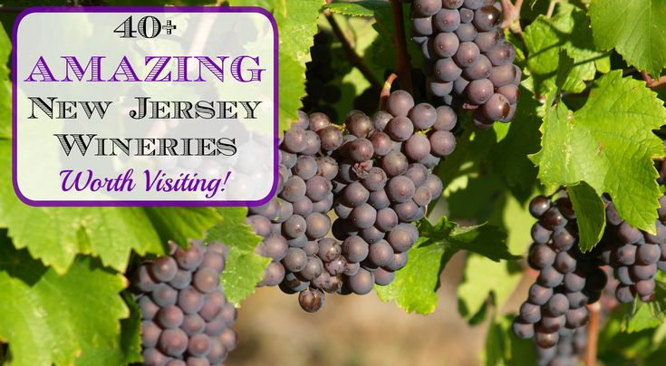 Fine Wine Good Food Tours Best Winery
