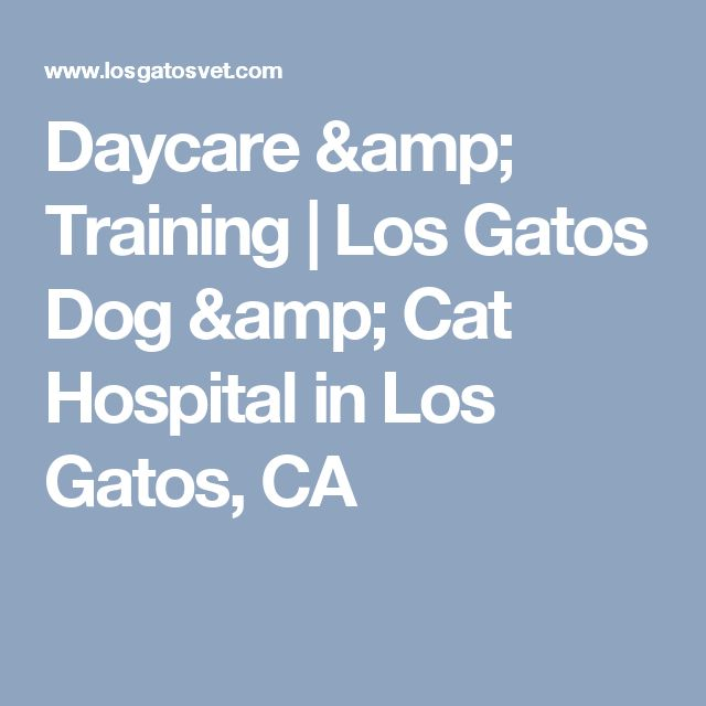 Daycare & Training | Los Gatos Dog & Cat Hospital in Los Gatos, CA