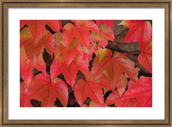 Jenny Rainbow Fine Art Photography Framed Print featuring the photograph Colors Of Autumn 1 by Jenny Rainbow