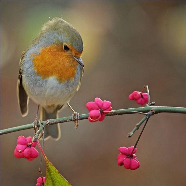 100 Outstanding Examples of Bird Photography | Demortalz - Get Inspired