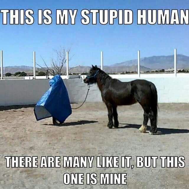 Funny Pony Quotes: Best 25+ Funny Horse Sayings Ideas On Pinterest