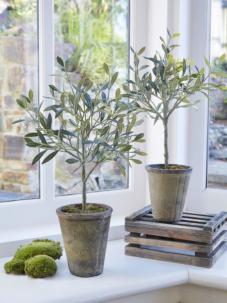 We are so excited by these incredibly life-like small olive trees, they are almost indistinguishable from their Mediterranean counterparts thanks to pretty grey-green foliage.
