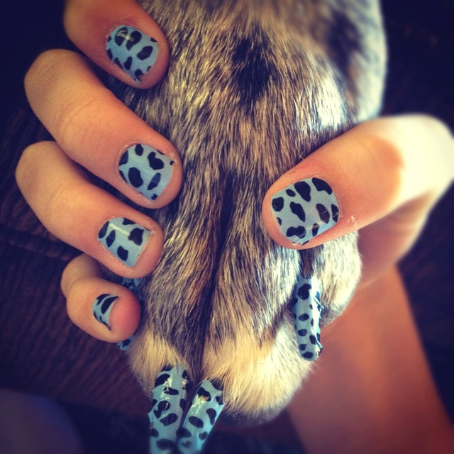 Can You Use Regular Nail Polish On Dogs: 38 Best Puppy Paw Nail Art Images On Pinterest