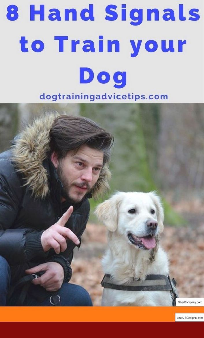 How To Train Your Dog To Stop Barking Outside And Pics Of Ways To