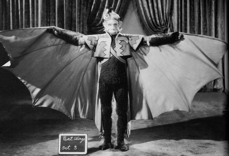 Best 25+ Flying monkey costume ideas on Pinterest | Flying ...