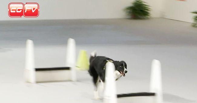 CGTVChannel alla 50esima Esposizione Canina
