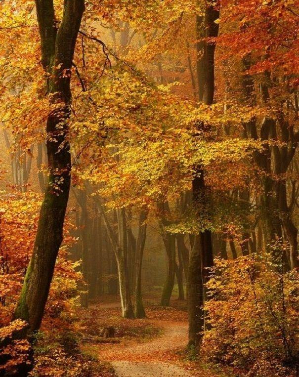 A hallgatózó kert alól a fa az űrbe szimatol, a csend törékeny és üres, a rét határokat keres. Riadtan elszorul szived, az út lapulva elsiet, a rózsatő is ideges mosollyal önmagába les: távoli, kétes tájakon készülődik a fájdalom.