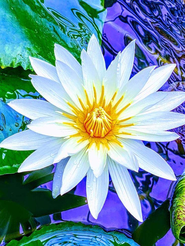 ボード Dailygreensnap 2020 07 29 オススメの植物 花の写真 のピン