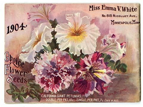 "There's quite a pink feeling on the back cover of Miss Emma V. White's 1904 catalog which is covered with ruffled California Giant Petunias.  Emma V. White called herself the ""North Star Seedswoman"" and had her first mailing in 1896. She produced small catalogs titled ""Choice Flower Seeds"" with colorful, hand painted covers aimed at woman customers."