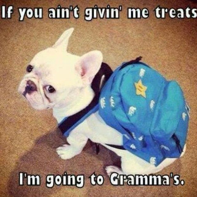 Going to Grammas quotes cute memes animals quote adorable dog puppy pets meme french bulldog