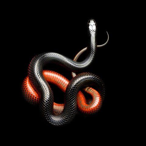 Stunning Snake Photos - Photography - ShortList Magazine