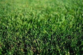 How to Grow Grass in Sandy Soil | eHow