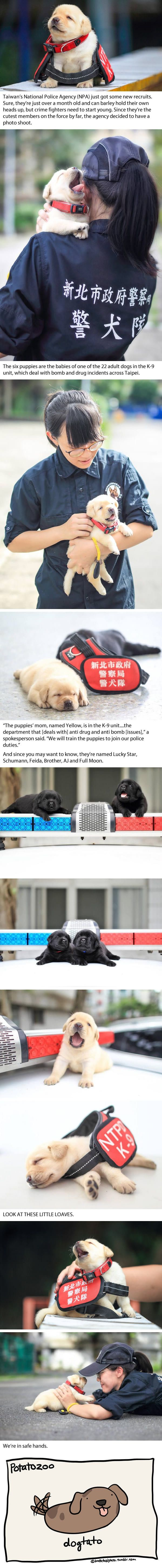 Best Police Humor Images On Pinterest Leo November And - The internet cant get enough of the taiwan police forces newest k9 recruits