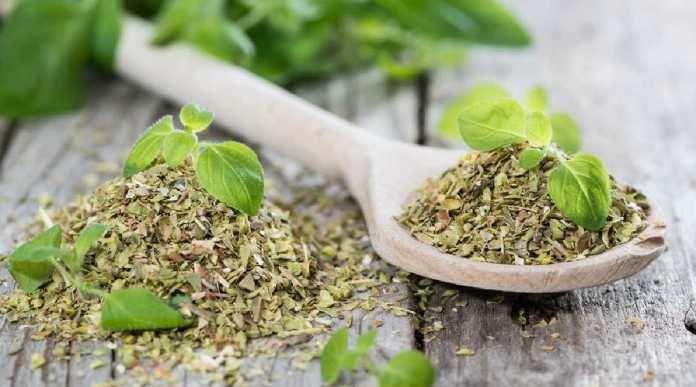 Léčivé oregano - kde a jak sbírat + 5 domácích receptů
