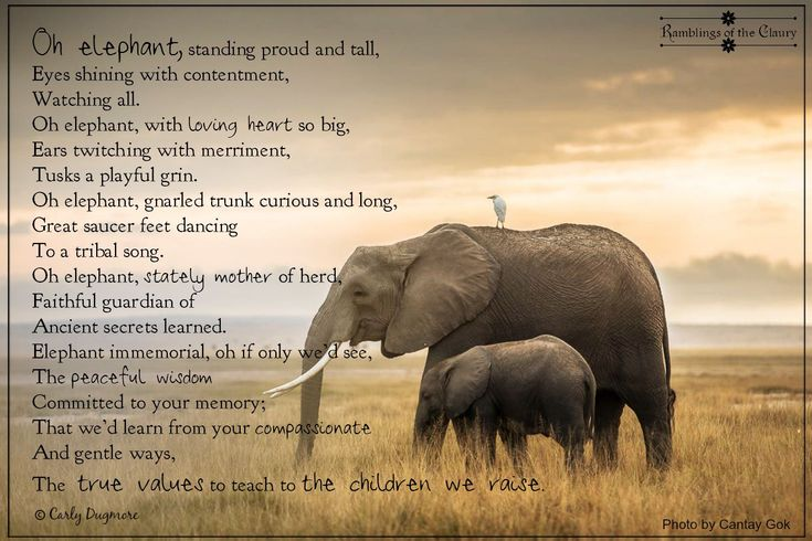 Elephant Values   Elephant spirit animal, Elephant ...