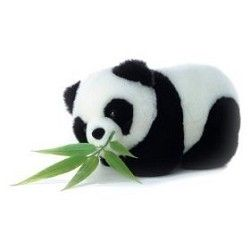 For my panda-loving son: Giant Panda Cam - National Zoo