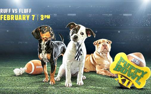 The Puppy Bowl Kicks Off On Animal Planet This February ... see more at PetsLady.com ... The FUN site for Animal Lovers