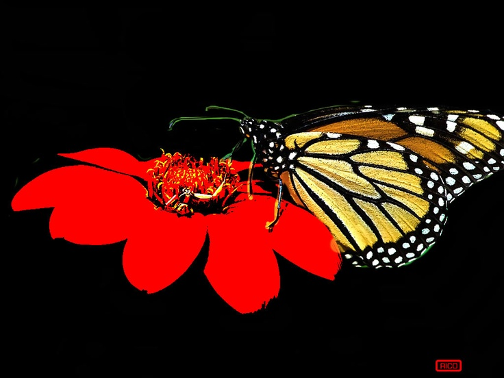 Butterfly on Flower by artist Rico is stunning hanging in any home. Purchase via website www.theartofrico.com