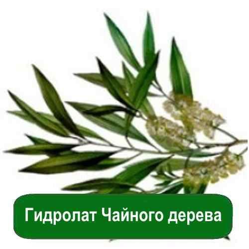 Гидролат чайного дерева это универсальное косметическое средство. Его можно добавлять в крем для лица и даже для кожи вокруг глаз. https://xn----utbcjbgv0e.com.ua/gidrolat-chajnogo-dereva-1-l.html #мылоопт #мыло_ #красота #польза #мыло_опт #наклейки  #декор #для_мыла #мыловарение #всё_для_мыла #праздники #подарки #для_детей #красота #рукоделие