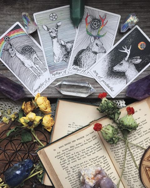 The Wild Unknown Tarot second edition image via @_theopaque_