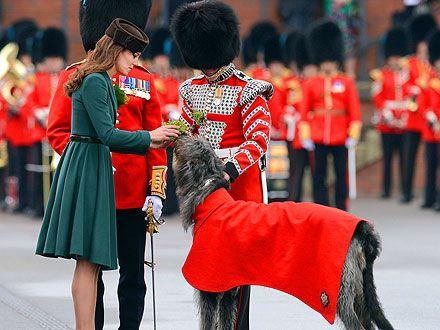 aww..:  Shako, British Royalty, Irish Wolfhounds, Dogs Big, Delight Dogs, Sharp Hats, Animal Pet, Irish Wolhound, Princesses Kate