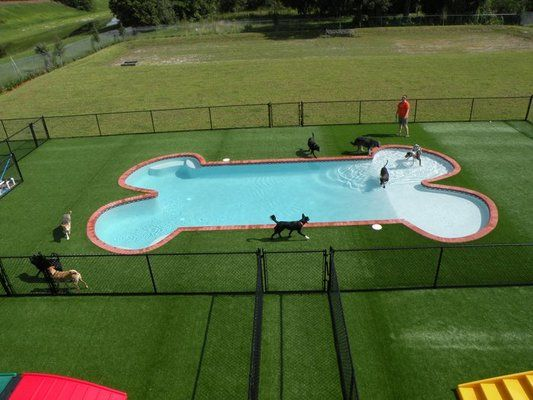 Happy Paws Pet Resort - Orlando's First and Only Inground Pool for Dogs.