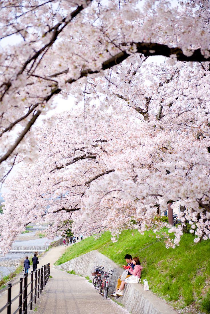 Kyoto, Japan. Beautiful places make you feel amazing and wonderful.