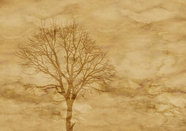 parchment background free | Free illustration: Paper, Parchment, Tree, Kahl - Free Image on ...