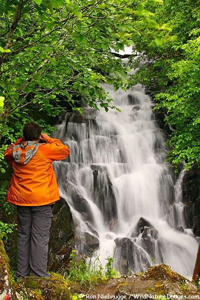 TONGASS NATIONAL FOREST PICTURE A visitor takes a picture of an unnamed waterfall in Tongass National Forest, Ketchikan, Alaska