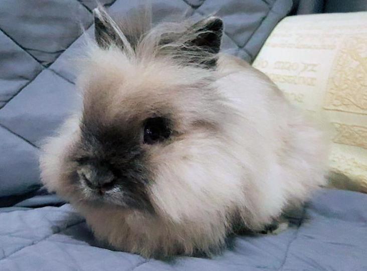 Cloud Find A Pet Rspca Org Uk In 2020 Pets Female Rabbit