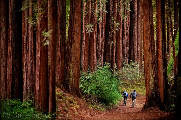 Landscaping With Redwood Trees : Holy redwoods landscape trees parks and the o jays