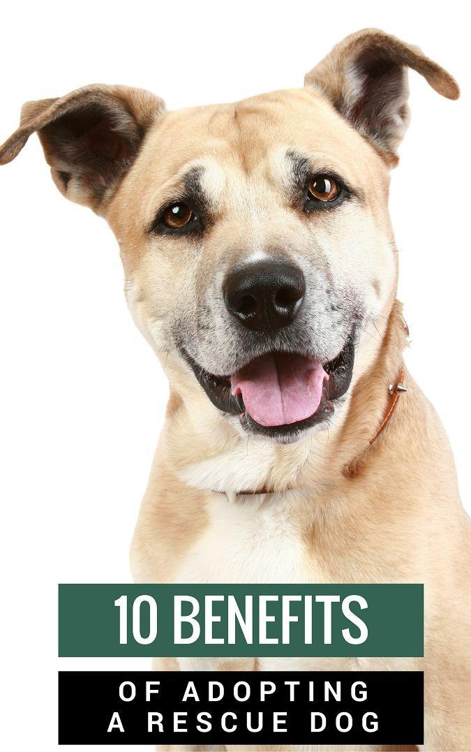 10 benefits of adopting a rescue dog dog adoption tips dogs rescue dogs rescue dogs for. Black Bedroom Furniture Sets. Home Design Ideas