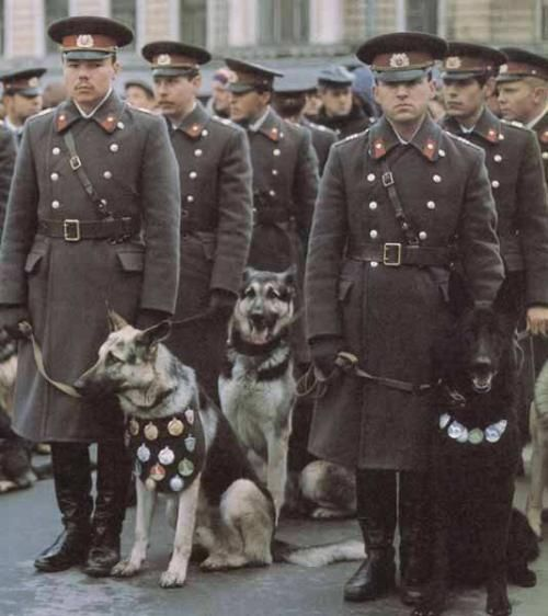 Soviet Police K9 units on parade in 1980s