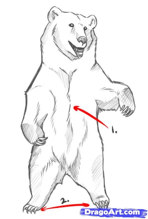 how to draw bear - photo #29