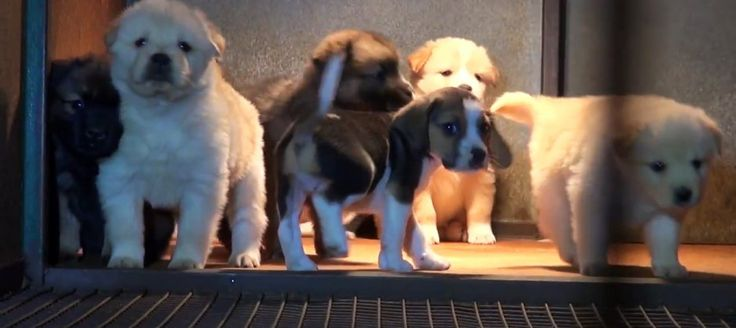 VICTORY! Puppy farmers plead guilty to 240 counts of cruelty