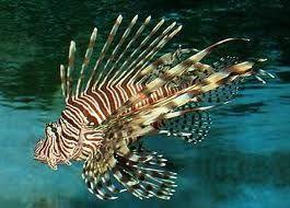 tengeri hal