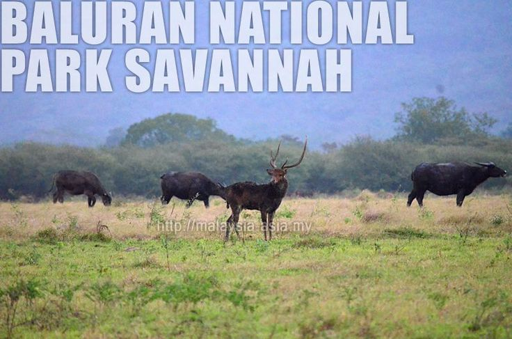 Taman Negara Baluran Banyuwangi
