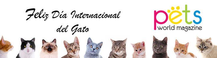 Feliz Día Internacional del Gato   #PetsWorldMagazine #RevistaDeMascotas #Panama #Gatos #GatosPty #Mascotas #MascotasPty #MascotasAdorables #SuperTiernos #PicOfTheDay #Cats #CatLover #CatOfTheDay #Cute #PetsMagazine