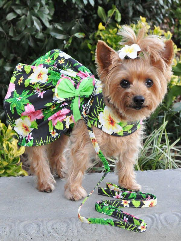 Hawaiian Dog Dress By Doggie Design Twilight Black Girl Dog