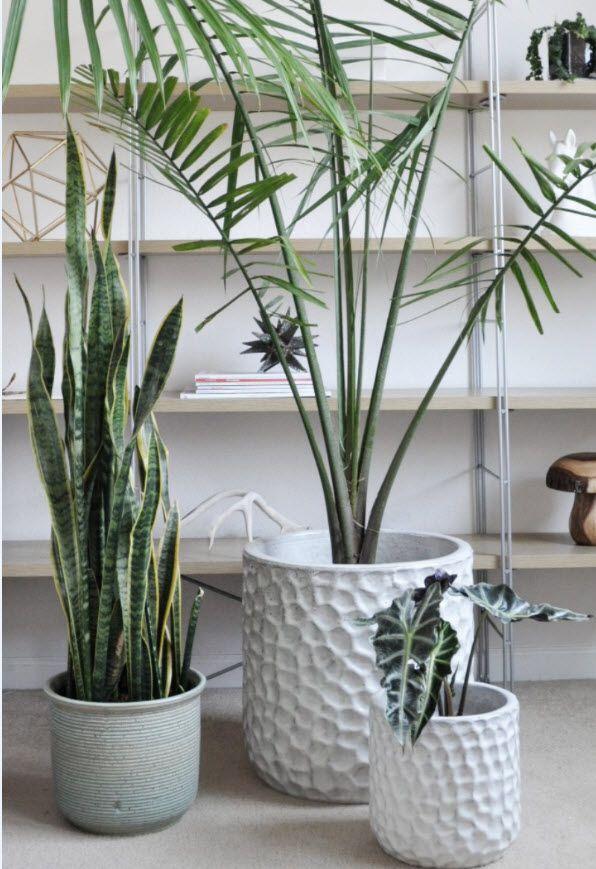 Past Meets Present: Handcrafted Ceramica (http://blog.hgtv.com/design/2014/02/20/past-meets-present-handcrafted-ceramica/?soc=pinterest)Houseplants