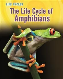 This series? The Life Cycle of Amphibians by Darlene R. Stille - ISBN: 9781406234336 (Raintree Publishers) | The Alice Smith School | Wheelers ePlatform