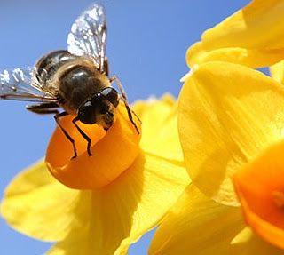φυσικά καλλυντικά Stella Crown: περνά περνά η μέλισσα (bee' s products)  #active_cosmetic_ingredients #ενεργά_συστατικά #naturalcosmetics #bees #beeproducts #honey #beeswax #royaljelly #propolis #beepollen #superfood #antiseptic #antibacterial #healthyliving #benefits #diycosmetics #diy #naturalbeauty #beauty_elixirs #recipeshare #recipeblog #beautyblog #skincare #loveyourskin #loveyourself #followme #φυσικά_καλλυντικά #stella_crown