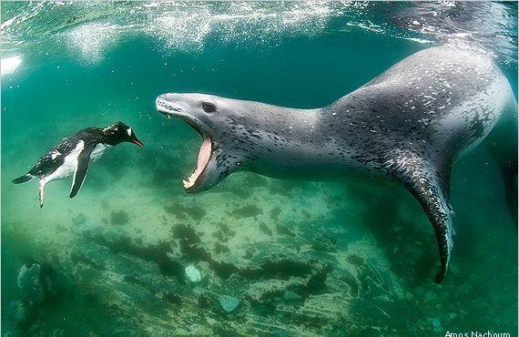 ScienceWeek.cz - Vítězné fotografie přírody podle časopisu National Wildlife. Fascinující pohled na zvířata a krajinu