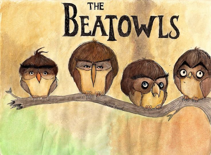 The beatowls funny music drawing lol illustration owl beatles rock n roll