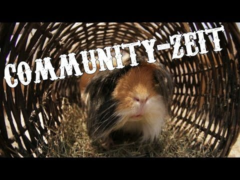 Community-Zeit für Meeri-Fans | Moehschweinchenfarm.de