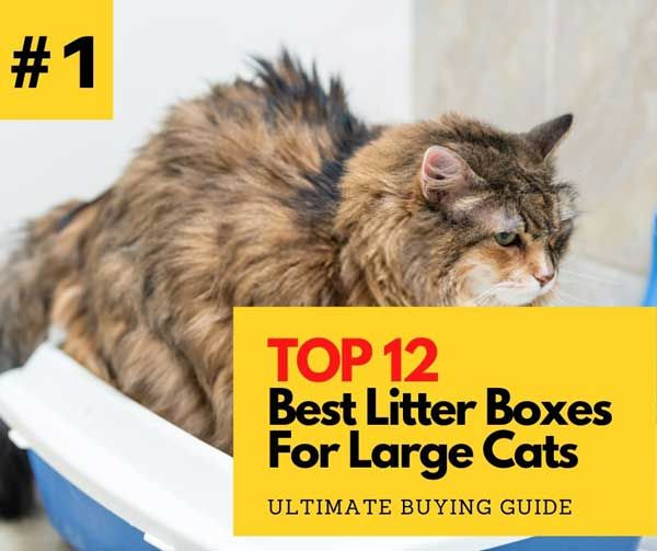 Top 12 Best Litter Box For Large Cats In 2020 High Side Covered In 2020 Best Litter Box Large Cats Litter Box